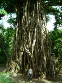 tree spirits tales and encounters dating